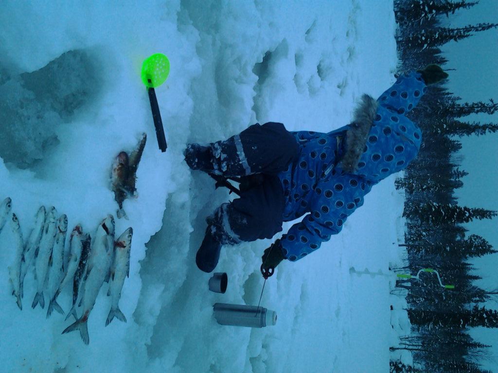 Lappi tarjoaa puhtaan luonnon ja kalastaminen voi olla huikea elämys